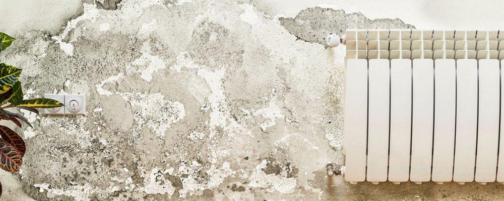 Réaliser un diagnostic complet pour un problème de mur humide